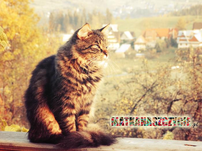 Kot na Szczycie