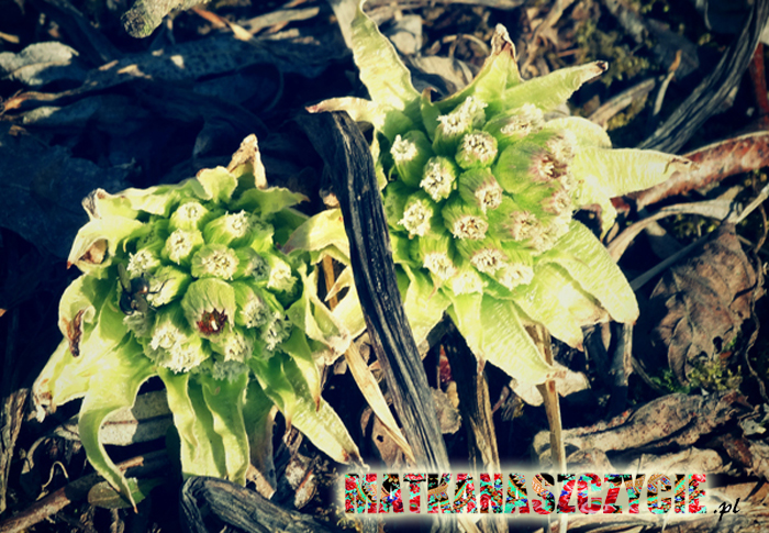 Pierwsze ślady wiosny
