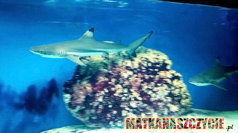 Oceanarium rekiny