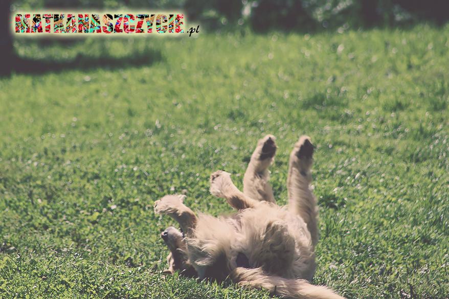 Szczęśliwy pies