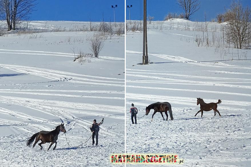 Konie zima w górach