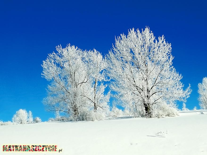 biała zima
